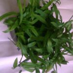 Manfaat Rumput Pada Suka Atau  Rumput Berkat Untuk Pengobatan Kanker